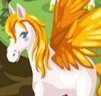 Cuidar do Pegasus