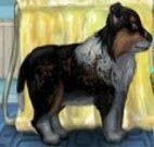 Cuidar de Cachorro Pet Shop