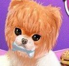 Banho no cachorro