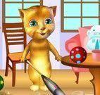 Gato Ginger limpeza da casa