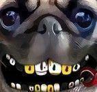 Pug no dentista