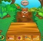 Cuidar dos animais na Floresta