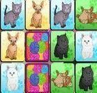 Memória dos gatinhos