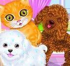 Pet shop banho dos animais