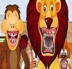 Limpar os dentes dos animais