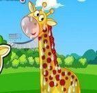 Cuidar da girafa