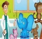 Cuidar dos animais na clínica veterinária