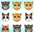 Trincas gatinho virtual