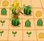 A fazenda de melancia