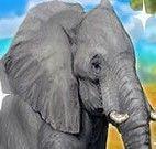 Cuidar do elefante