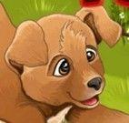 Cuidar dos cachorros do canil