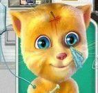 Cuidar do gato virtual na ambulância