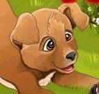 Cuidar dos filhotes de cão no canil