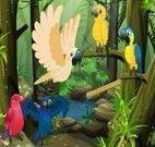 Cuidar de Papagaio