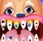 Cachorro dentista