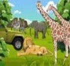 Decoração da selva