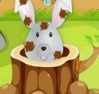 Cuidar do coelho sujo
