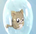 Gatinhos dentro da bolha