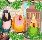 Jogo de Cuidar de passarinhos