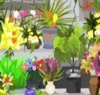 Procurar objetos na Floricultura